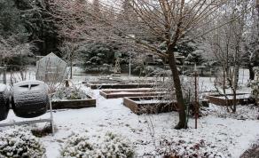 pretty winter scene